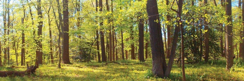 Whispering Woods RU Digging Site
